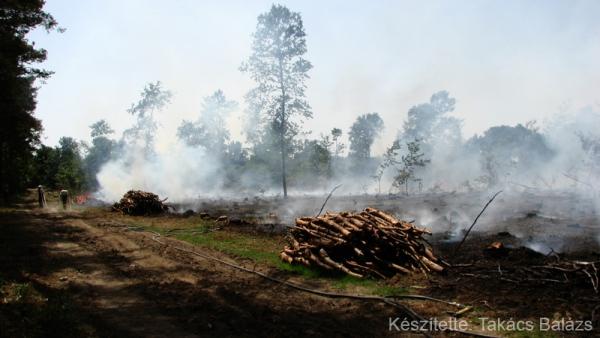 Erdőtűz Dénesfa határában